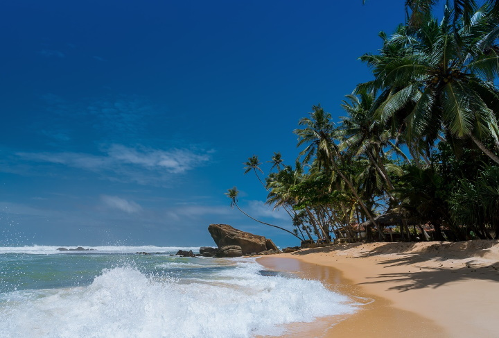 Beach with water and palm trees