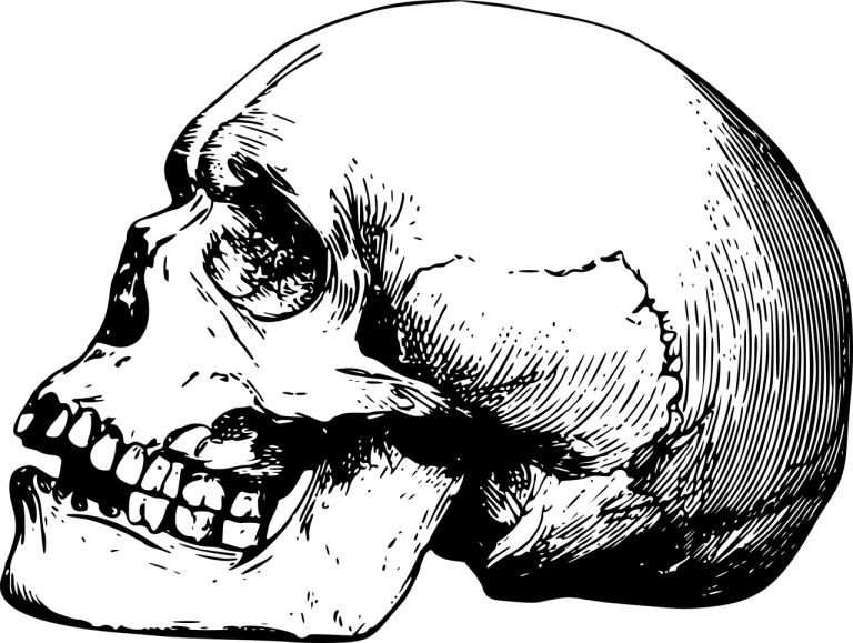 Skeleton skull graphic